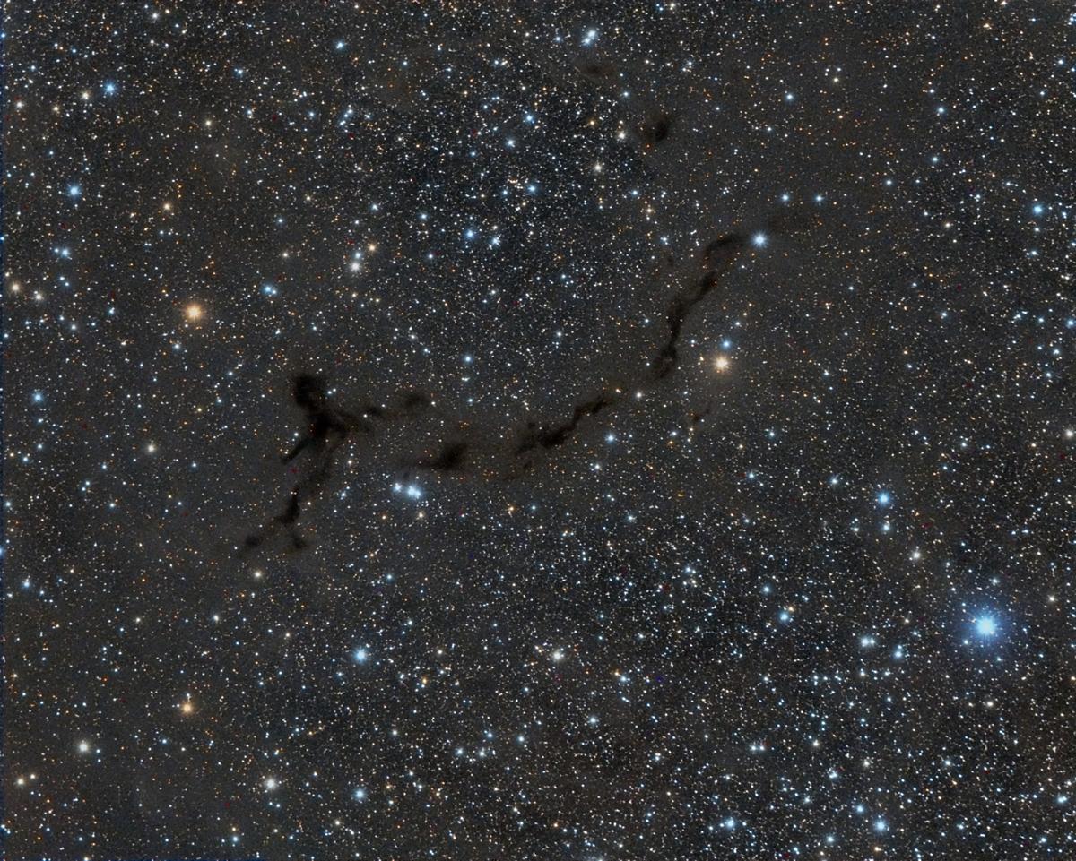 a011-sea-horse.jpg